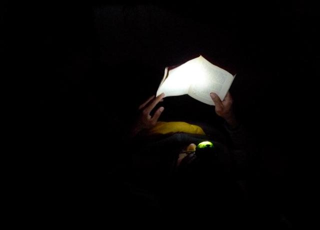 Bear Bait in the Dark
