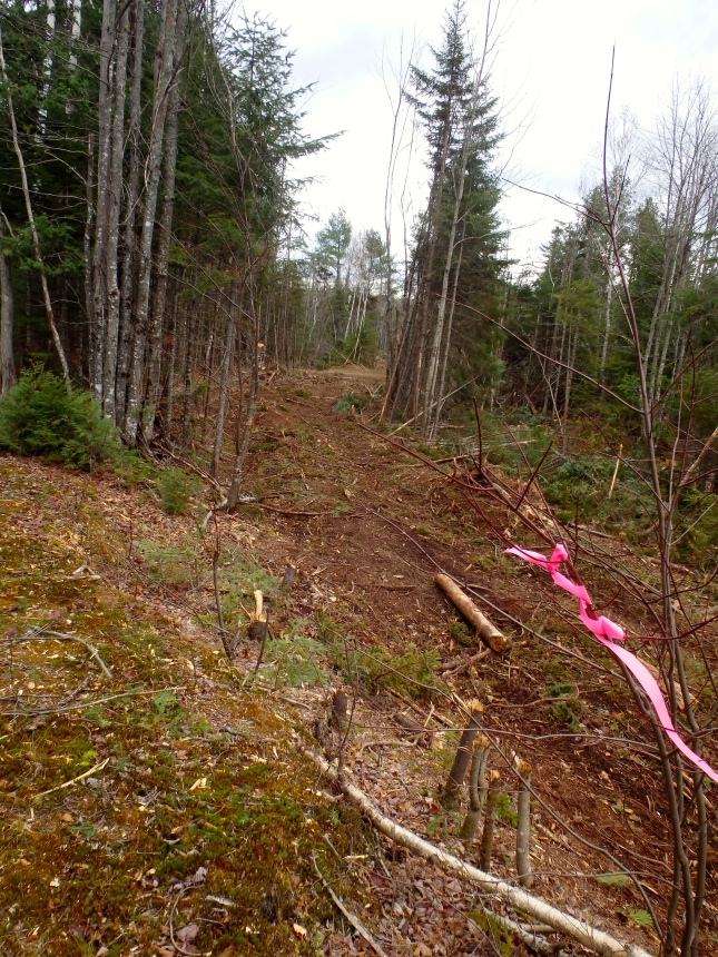 Fresh logging visible along trail into Flagstaff