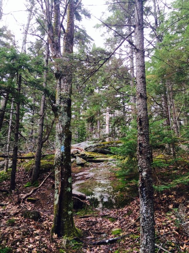 Sky Blue Trail/ Camden Hills State Park