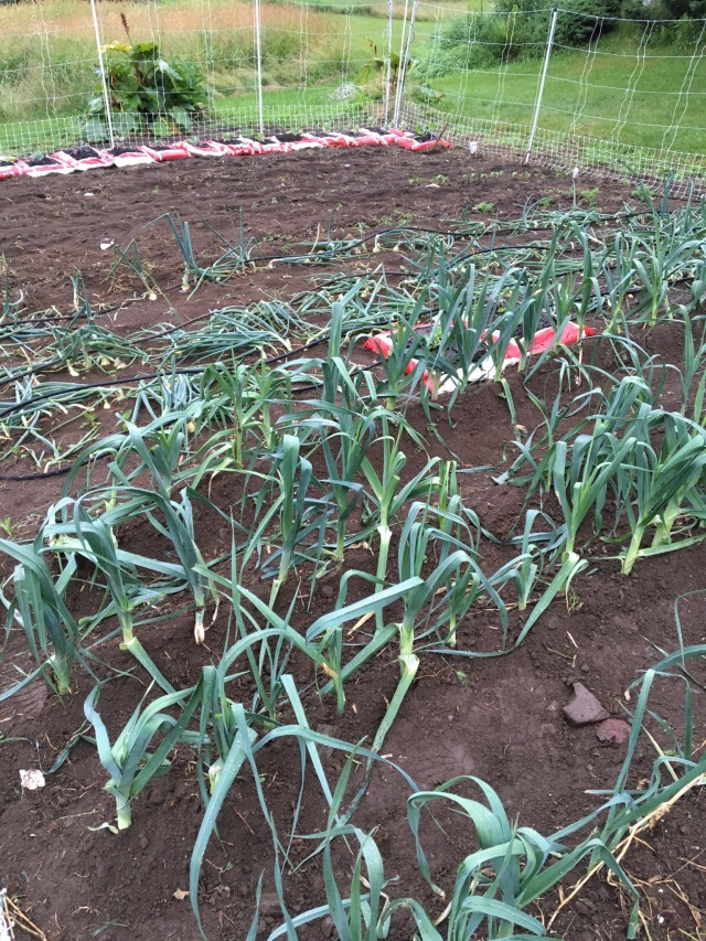 Leeks, onions and lots of plastic bags.