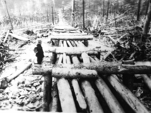 Long log slide into lake